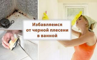 Как избавиться от плесени в ванной: 8 проверенных способов