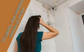 Что делать, если появилась плесень на стене в квартире?