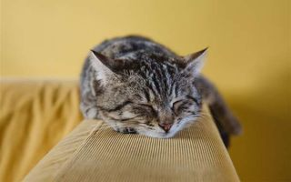 Как избавиться от запаха кошачьей мочи на диване: проверенные способы