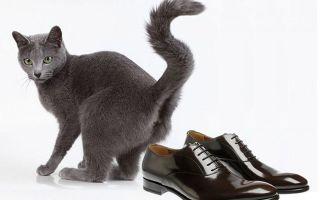 Средства, избавляющие от запаха кошачьей мочи в обуви