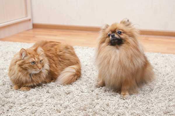 много шерсти от домашних животных на ковре