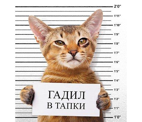 кот, который писал в тапки